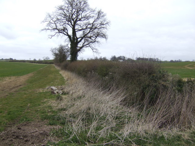 Hedgerow north of Buckby Lodge