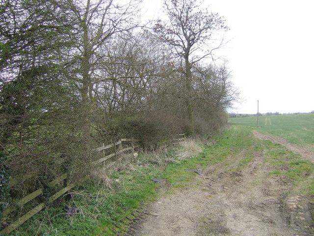 Spinney next to a stream