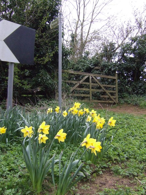 Spring flowers by the bridleway sign
