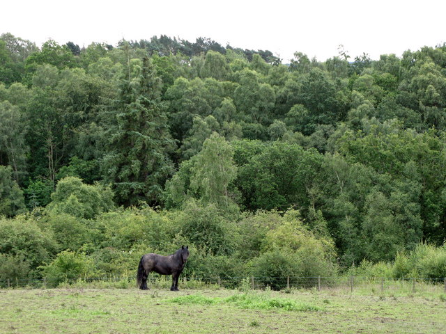Pasture in Linnel Wood