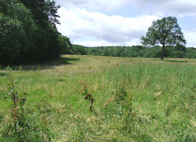Field by Spoonhill Wood, Shropshire