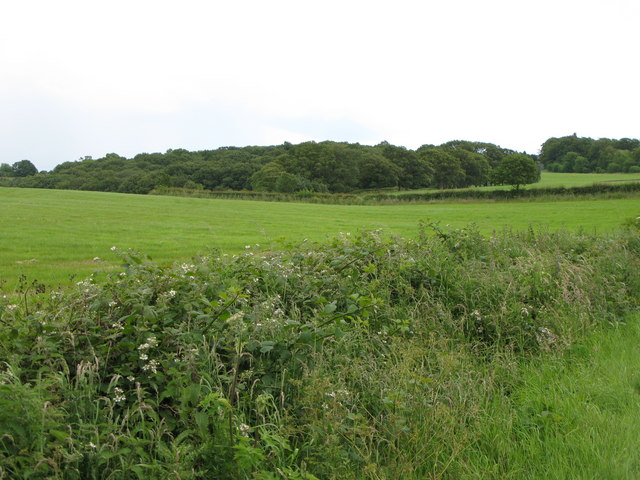 Pastures and woodland near Low House