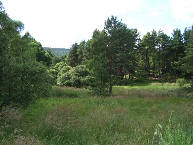 Parkland near Newmill