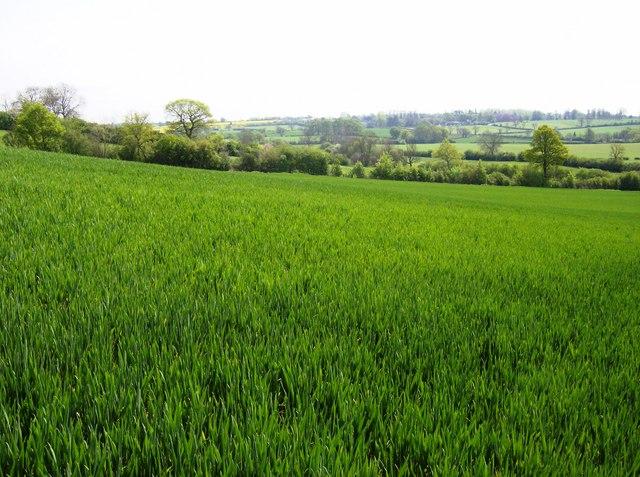 Farmland north of Farthingstone