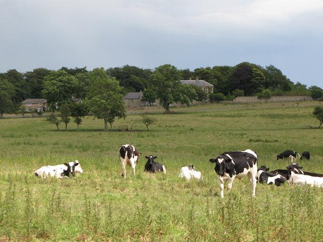Pastures below Highclear