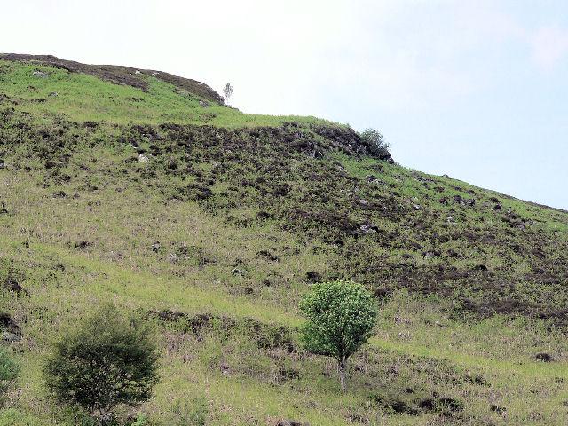 Sparse vegetation on the rocky hillside