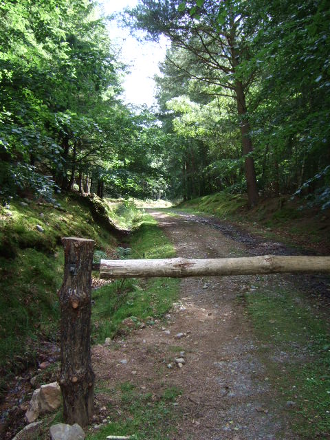 Entrance to wood near Balfour