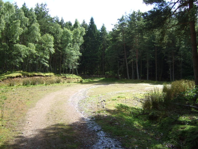Turning circle in woodland
