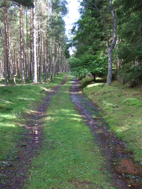Track through woodland