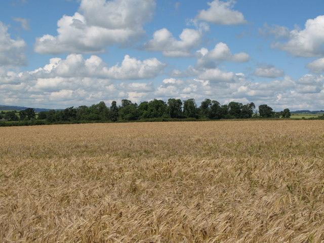 Arable land near Newton and the wood around Brockhole Burn
