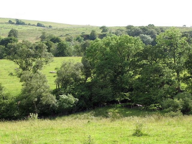 Pastures and woodland near Billerley