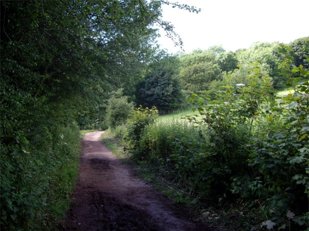 Track through Clent Hills
