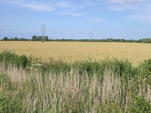 Farmland near Sarre Wall, Chislet Marshes