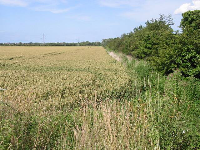 The quieter side of the hedgerow