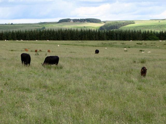 Pastures and plantation below Anton Hill (2)
