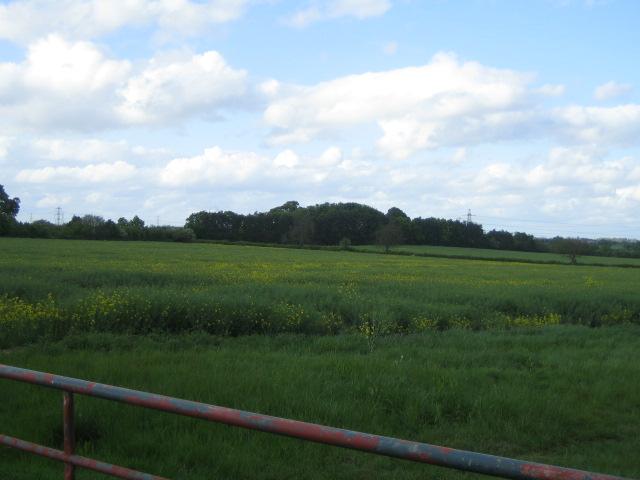 Fields near Claydon Hill Farm, Sandhill