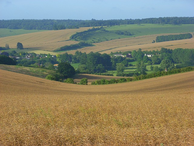 Oil-seed rape on Chain Hill