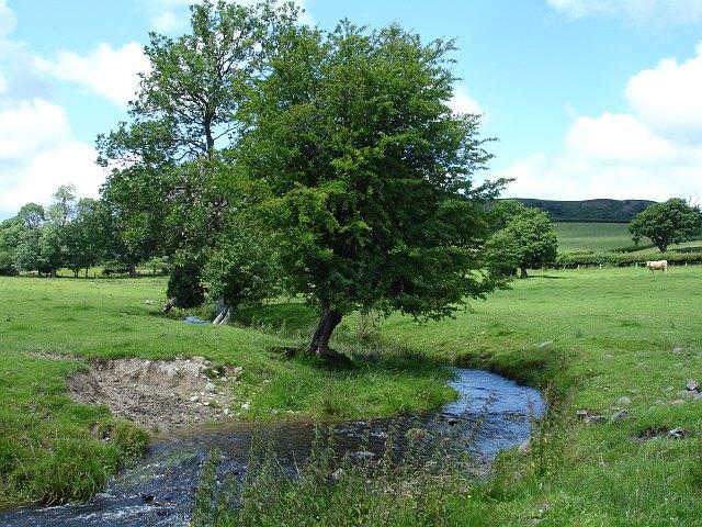 Feeder stream to Afon Einion