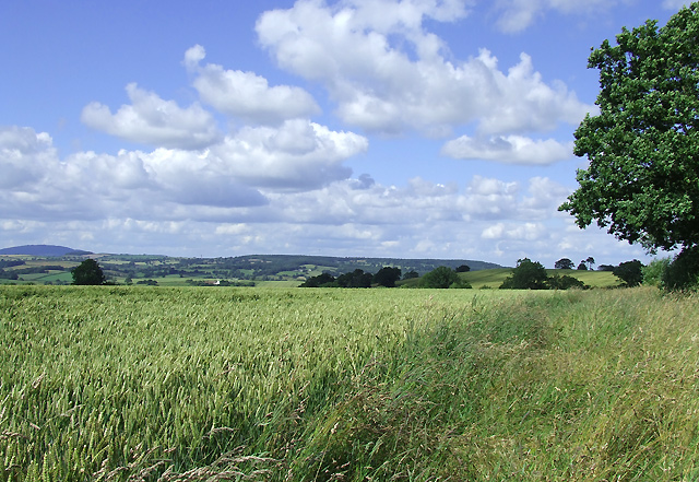 Wheat Field near Upton Cressett, Shropshire
