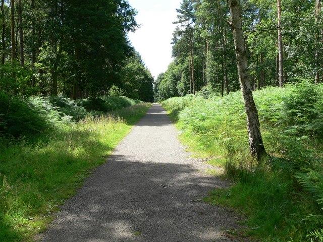 Martinshaw Wood near Groby
