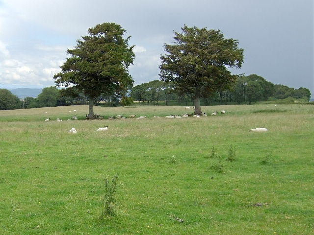 Two Trees of Llansannor