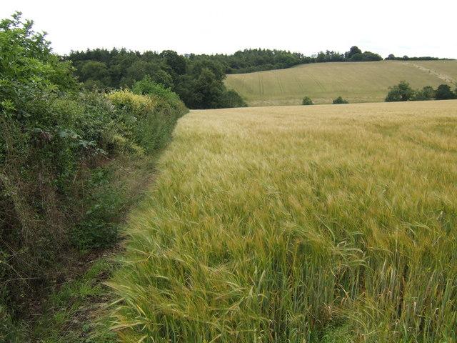 Barley fields north of Dira Wood