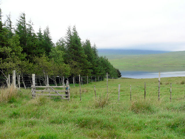 Forest at west end of Loch Naver