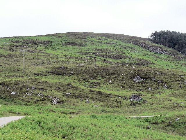 Bracken on the hillside