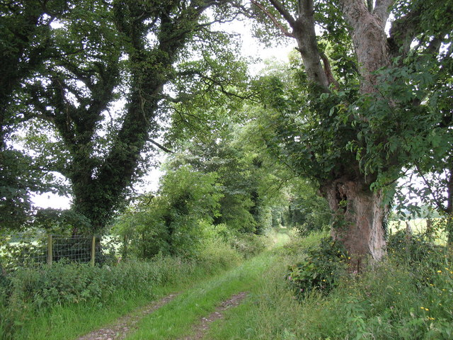 Lon Plas - the driveway to a long disappeared mansion