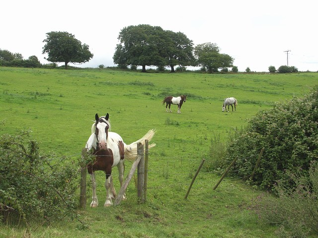 Horses in the Field at Lower Farm