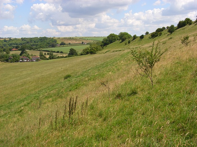 Downland, Woodford