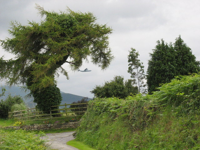 A quaint tree at Hafodol Newydd with a Hercules in the background