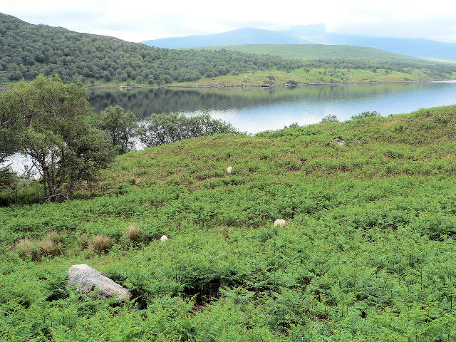 Bracken by Loch Naver