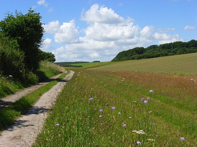 Farm track, Woodford