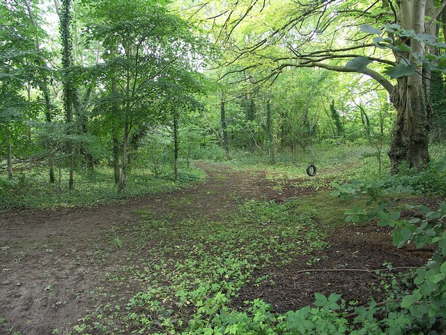 Woodland at Lower Waterston