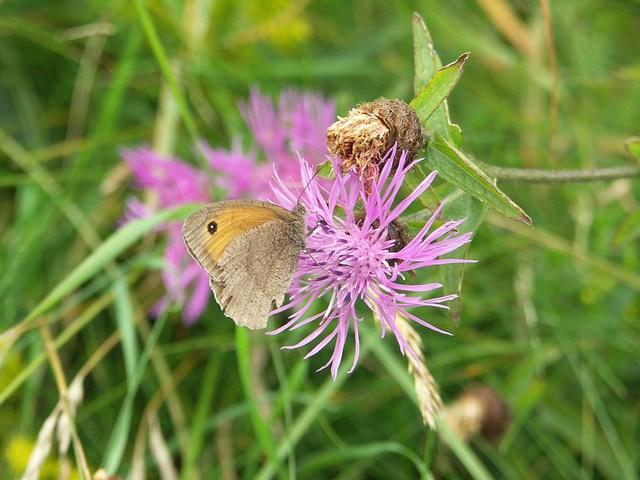 Flora & Fauna at Higher Waterston
