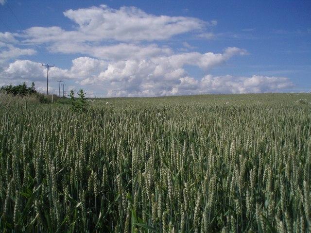 Field, Panbride