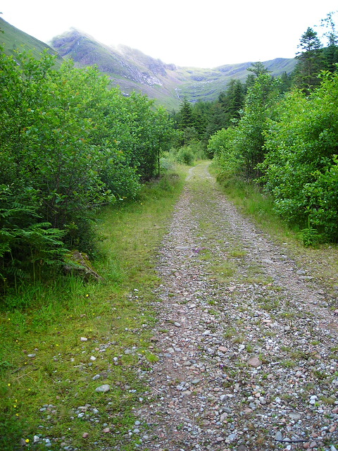 Forest Track in Glen Nevis