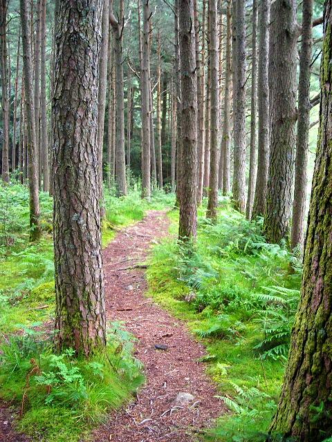 Forest Walk Near Allt a' Choire Dheirg