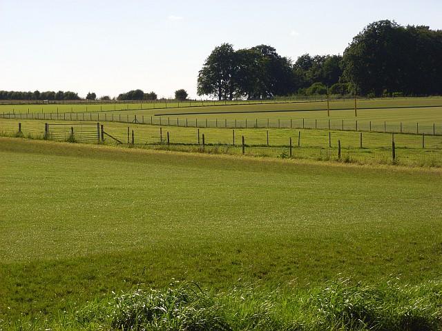 Fields at Druid's Lodge