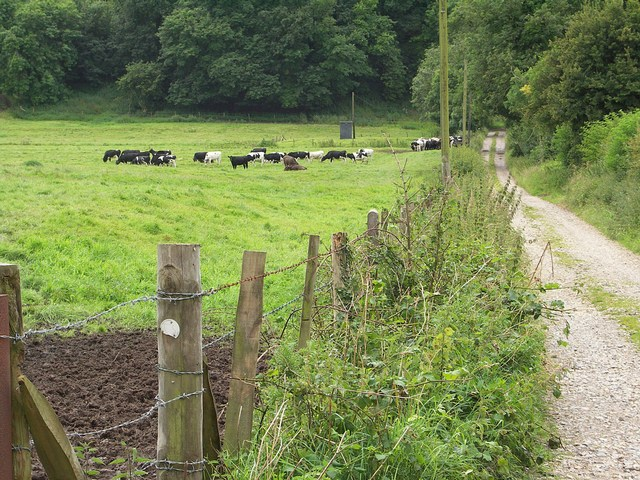 East Entrance to Little Puddle Farm