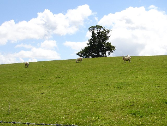 Pasture at Pentyrch