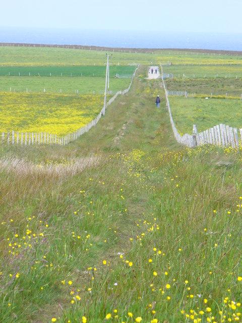 Footpath by Denwick