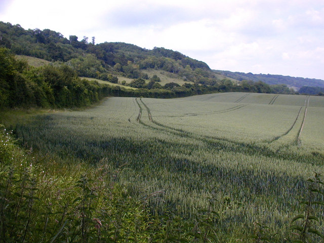 North Downs, Pilgrim's way follows hedge