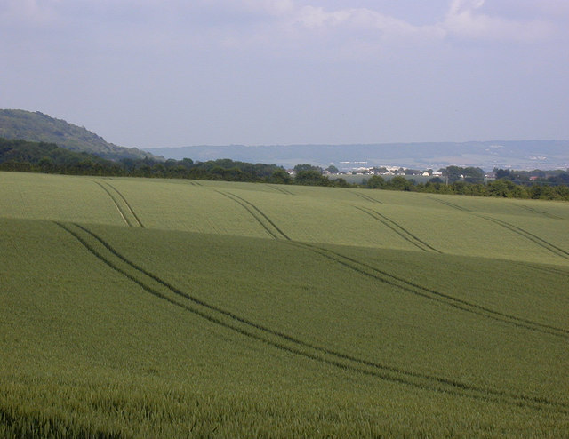 Wheat and Trottiscliffe