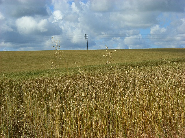 Farmland, Netheravon