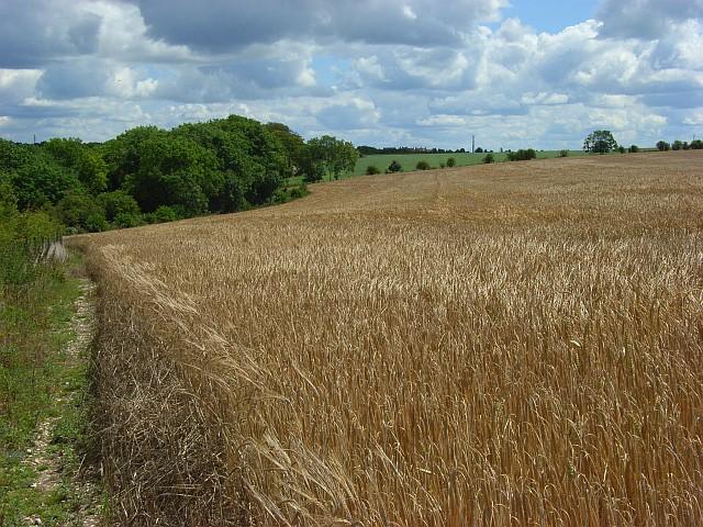 Farmland, Amesbury