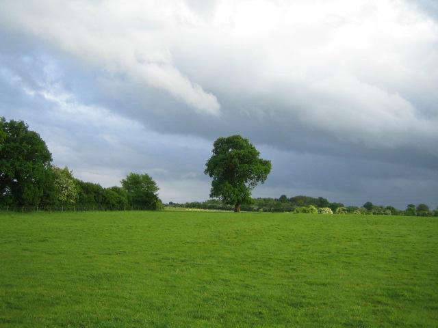 Field and trees near Addington