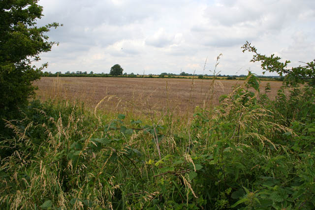 Hedgerow near Welby