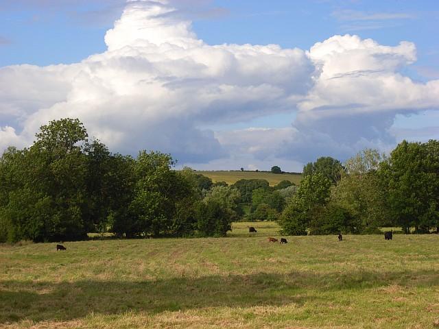 Pastures, Wylye